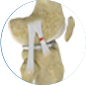 anterolateral ligament reconstruction by Dr. McCarthy